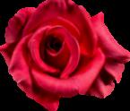 rose-zenjenskin.com