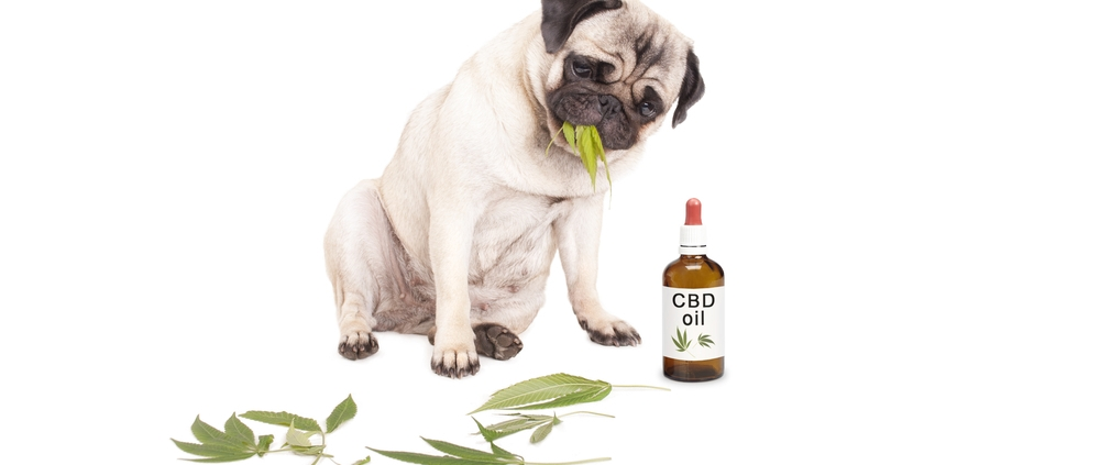 CBD-Oil_for-Dogs-zenjenskin