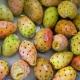 Prickly-Pear-Oil-Skin-Care-Benefits-Zenjenskin